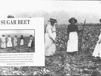 Great Blakenham sugar beet farming 1914, Kindly supplied by Mr & Mrs R Hood